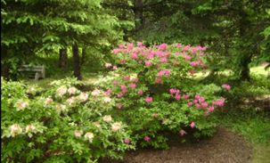 BotanicGarden303x183