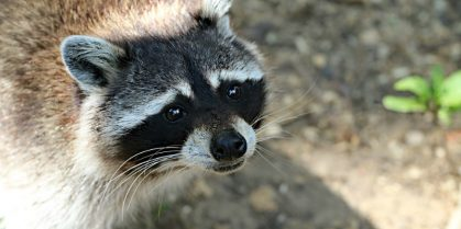 Rabies Control Measures to Continue