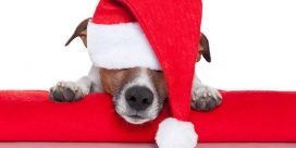 Christmas Pet Photos for Oromocto and Area SPCA