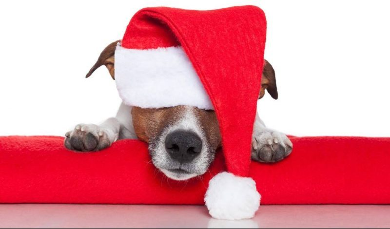 christmaspetphotos-Oromocto-and-Area-SPCA
