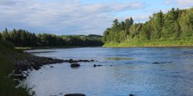 Miramichi Fishing Report for Thursday, August 11, 2016